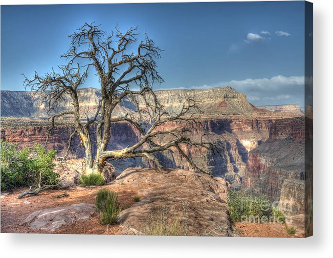 Grand Canyon Acrylic Print featuring the photograph Grand Canyon Tree At Toroweap by Bob Christopher