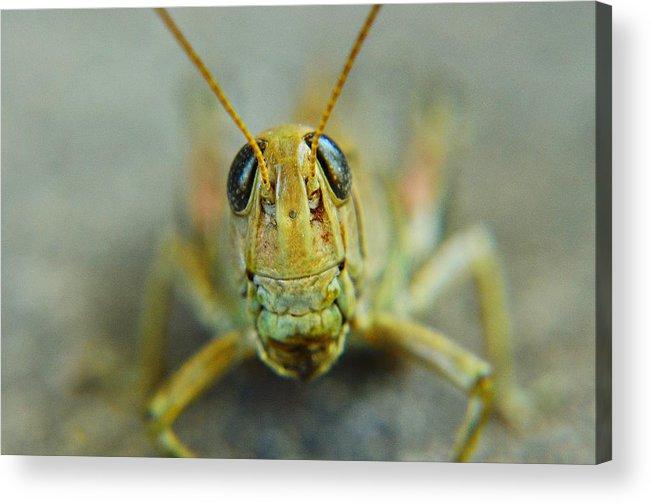 Grasshopper Acrylic Print featuring the photograph Grasshopper by Ryan Cummings