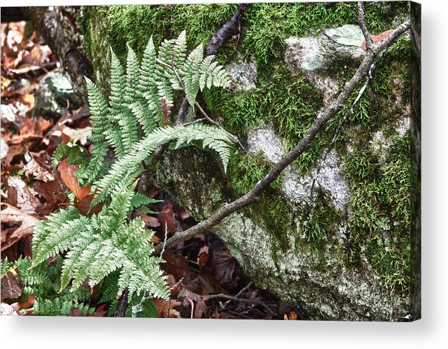 Virginia Acrylic Print featuring the photograph Ground Foliage Near Mountain Lake by James Woody
