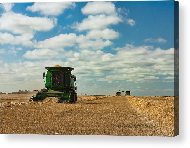 Harvest Acrylic Print featuring the photograph Harvest On The Canadian Prairies by Matt Dobson