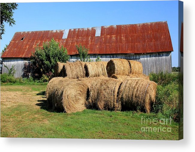 Harvest Acrylic Print featuring the photograph Harvesting by Sophie Vigneault