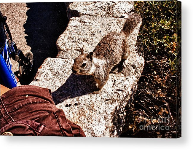 Hdr Acrylic Print featuring the photograph hd 375 hdr - Feed Me 1 by Chris Berry