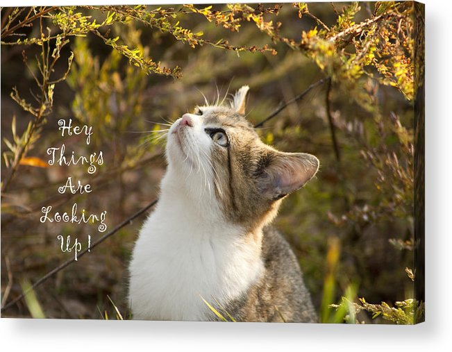 Hey Acrylic Print featuring the photograph Hey Things Are Looking Up by Kathy Clark