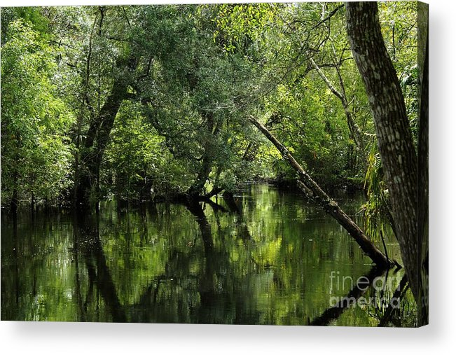 Hillsborough River Acrylic Print featuring the photograph Hillsborough River Reflections by Theresa Willingham
