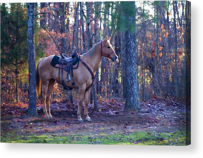 Horse Acrylic Print featuring the photograph Horse Waiting For Rider by Kathy Clark