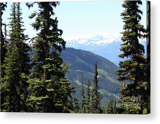 Acrylic Print featuring the photograph Img0071 by Jane Whyte