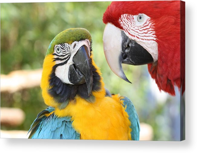Colors Acrylic Print featuring the photograph Just Between Friends by Andrea OConnell