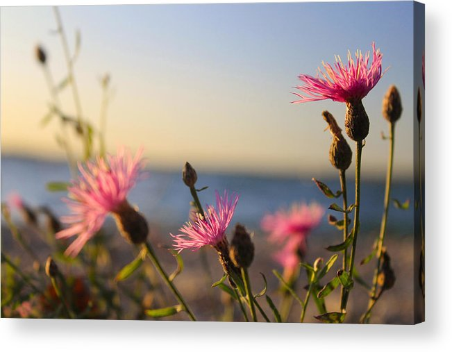 Hovind Acrylic Print featuring the photograph Lakeside Flowers by Scott Hovind