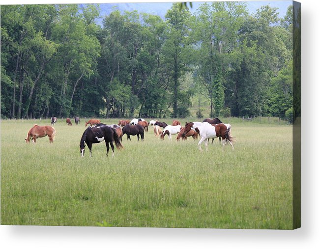Horses Acrylic Print featuring the photograph Lazy Afternoon by David White