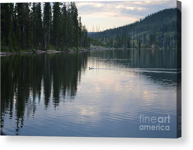 Duck Acrylic Print featuring the photograph Lewis Lake With Waterfowl by Roxann Whited