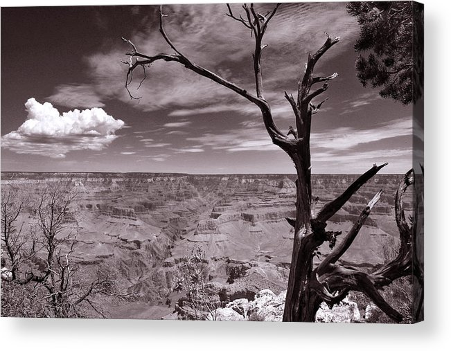Lightning Acrylic Print featuring the photograph Lightning Striking Tree Of The Grand Canyon by Cedric Darrigrand