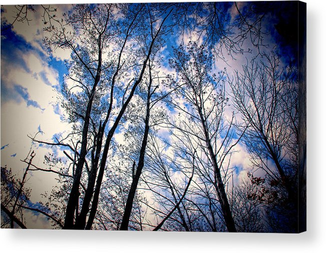 Woods Acrylic Print featuring the photograph Looking Up When You're Down by Harmonie Sites