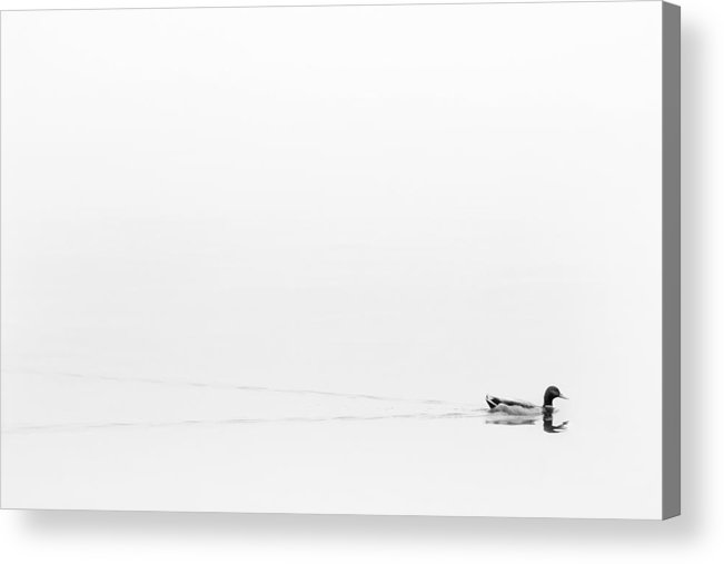 Fog Acrylic Print featuring the photograph Lost In The Fog by Cindy Tiefenbrunn