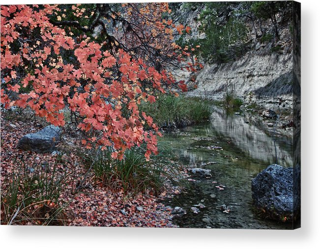 Landscape Acrylic Print featuring the photograph Lost Maples Fall Afternoon by James Woody