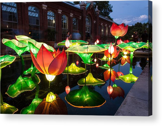 Art Acrylic Print featuring the photograph Lotus Flower by Semmick Photo