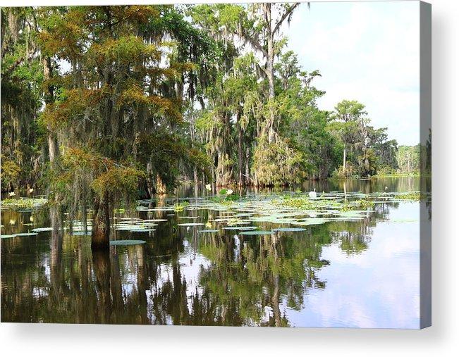 Lake Acrylic Print featuring the photograph Louisiana by Linda Alexander