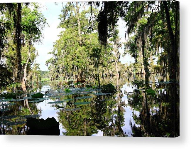 Lake Acrylic Print featuring the photograph Louisiana Reflections by Linda Alexander