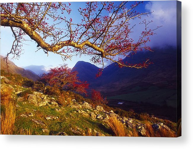 Berry Acrylic Print featuring the photograph Macgillycuddys Reeks, County Kerry by Gareth McCormack