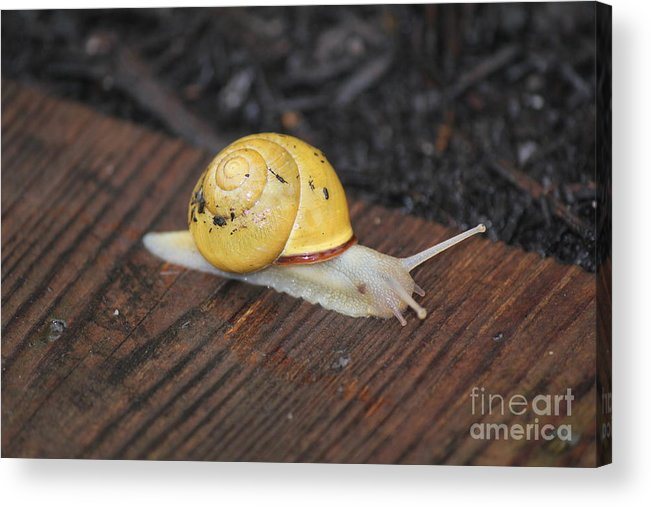Making Home Affordable Program Acrylic Print featuring the photograph Making Home Affordable Program by Scenesational Photos