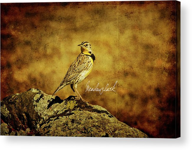 Eastern Acrylic Print featuring the photograph Meadowlark by Lana Trussell