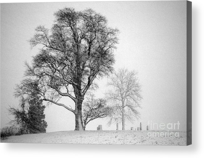 Fine Art Black And White Images Of Trees Acrylic Print featuring the photograph Mid Winter- Guardian Tree by Mark Clifford