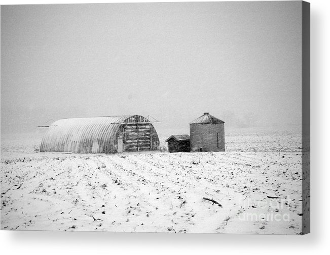 Fine Art Black And White Images Of Trees Acrylic Print featuring the photograph Mid Winter- Kent County Ontario by Mark Clifford