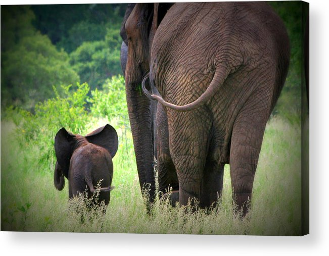 Elephant Acrylic Print featuring the photograph Mom And Baby by Deborah Hall Barry