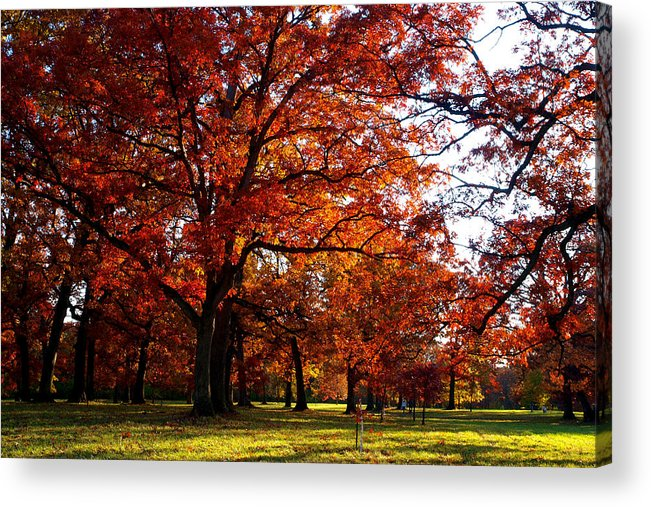 Arboretum Acrylic Print featuring the photograph Morton Arboretum In Colorful Fall by Paul Ge