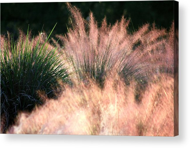 Red Pampas Acrylic Print featuring the photograph Nature's Lights by LC Linda Scott
