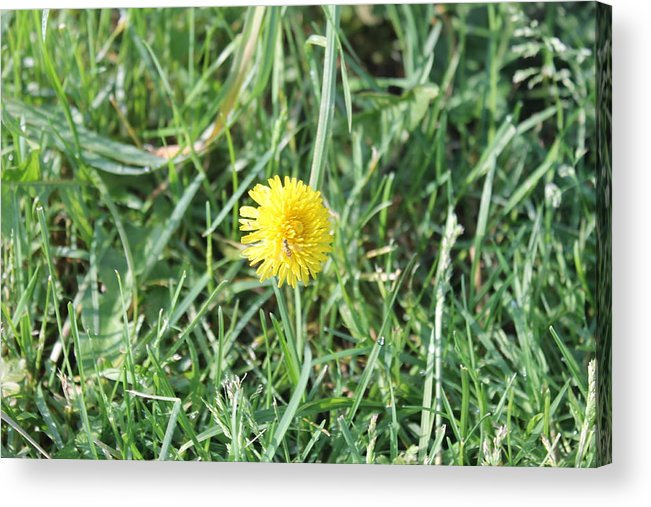 Nature Acrylic Print featuring the photograph Nectar Gathering by Michael Duncan