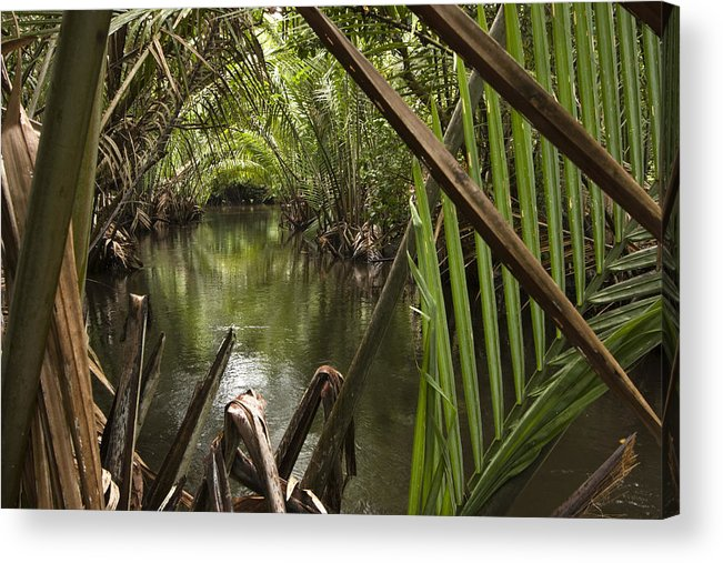 Outdoors Acrylic Print featuring the photograph Nipa Palms Line A Channel by Tim Laman
