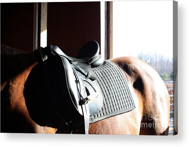 Horse Acrylic Print featuring the photograph Off To Work by Lauren Nicholson