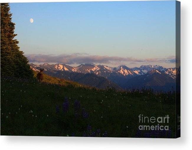 Landscape Acrylic Print featuring the photograph Olympics At Sunset 2 by Angela Q