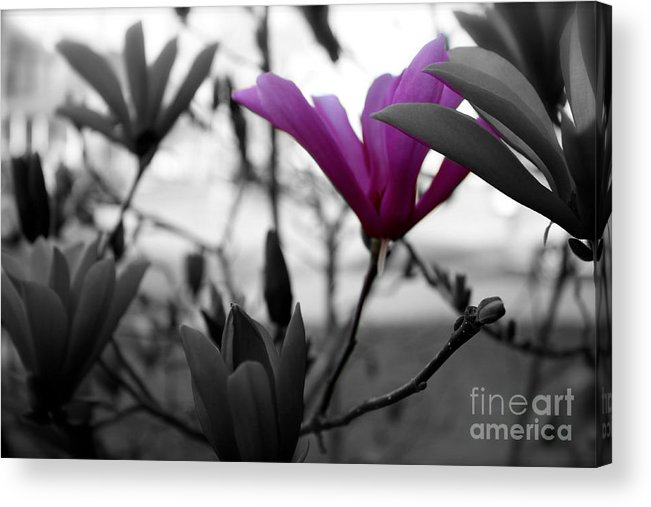 Flowes Acrylic Print featuring the photograph One In The Bunch by Ted Wheaton