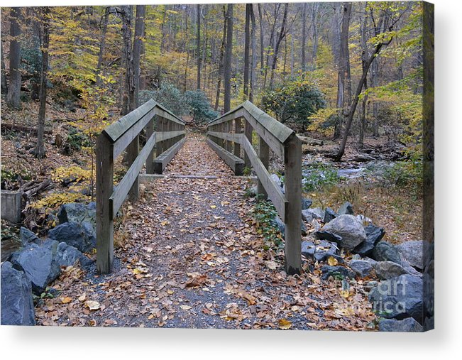 Nature Acrylic Print featuring the photograph Overpass by Bella Photography