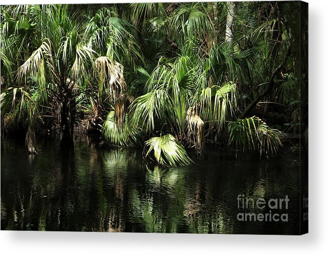 Palmettos Acrylic Print featuring the photograph Palmettoes In The River by Theresa Willingham