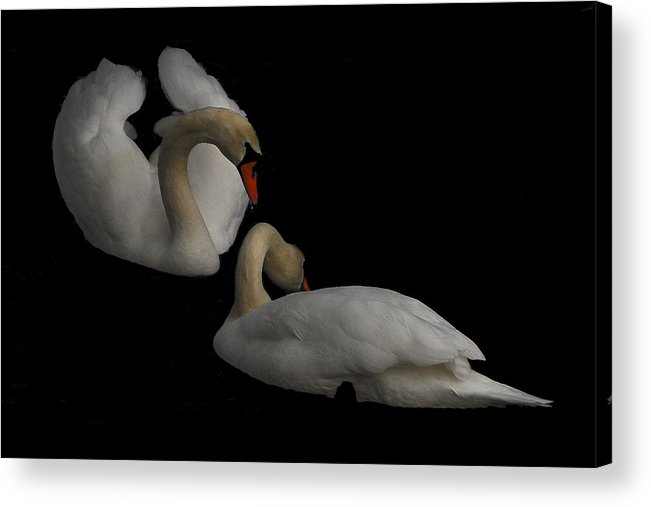 Swan Acrylic Print featuring the photograph Partners by Peggie Strachan