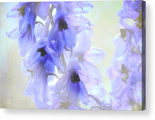 Flowers Acrylic Print featuring the photograph Passion For Flowers. Blue Dreams by Jenny Rainbow