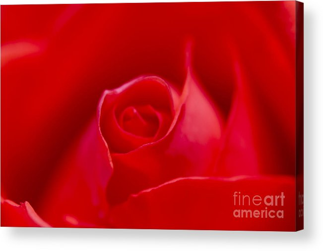 Flower Acrylic Print featuring the photograph Passion by Tad Kanazaki
