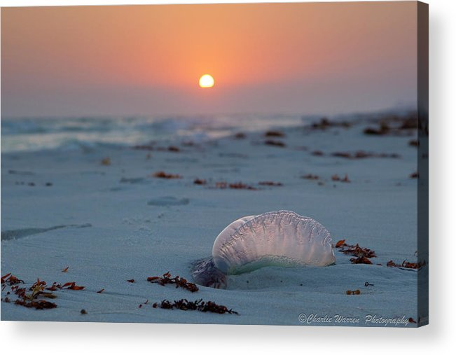 Beach Acrylic Print featuring the photograph Peaceful Man Of War by Charles Warren