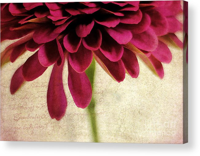 Background Acrylic Print featuring the photograph Petales De Fleurs by Darren Fisher
