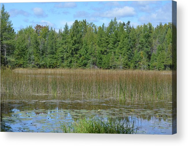 Ponds Acrylic Print featuring the photograph Pintail Pond2 by Jennifer King