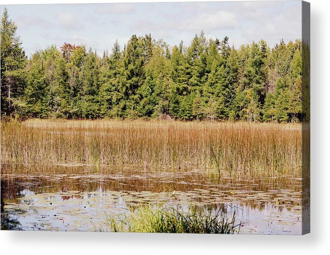 Ponds Acrylic Print featuring the photograph Pintail Pond3 by Jennifer King