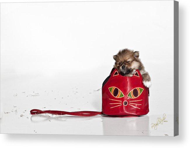 Puppies Acrylic Print featuring the photograph Pomeranian 2 by Everet Regal