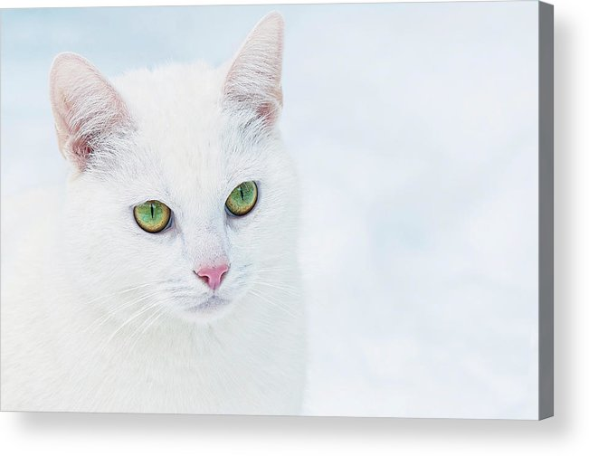 Horizontal Acrylic Print featuring the photograph Portrait Of Cat by Shot By Supervliegzus