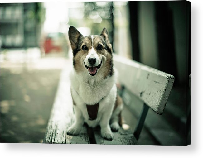 Horizontal Acrylic Print featuring the photograph Portrait Of Dog by Moaan