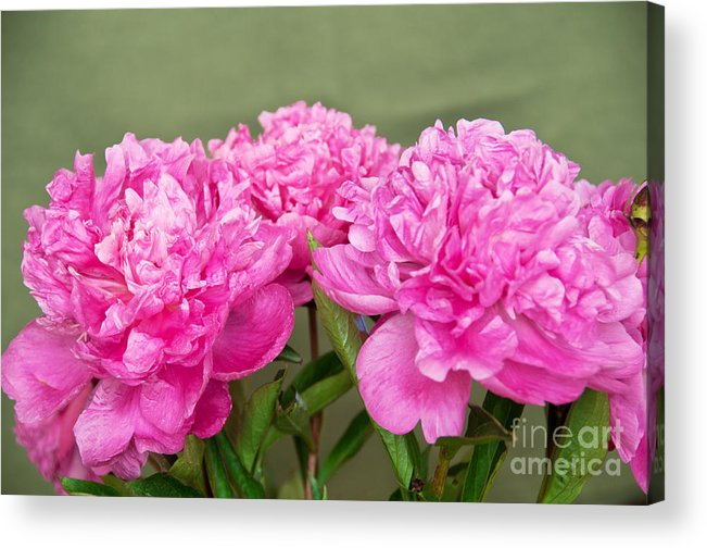 Photograph Acrylic Print featuring the photograph Pretty Peonies by Bob and Nancy Kendrick
