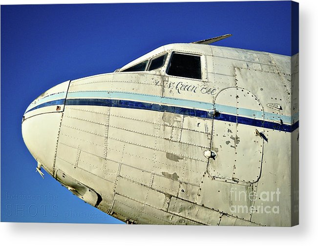 Plane Acrylic Print featuring the photograph Queen Bee by Catherine Jarret