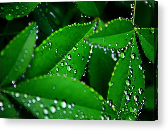 Nature Acrylic Print featuring the photograph Rain Patterns by Toni Hopper