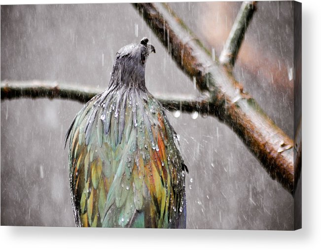 Bird Acrylic Print featuring the photograph Rainbow Showers by Trish Tritz